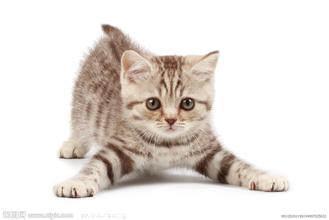 关于小猫的作文