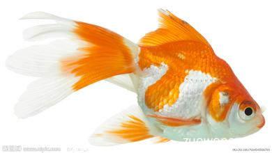 小学生动物中国画金鱼图片大全