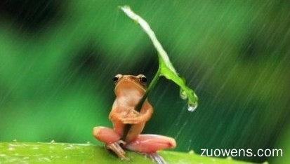 关于躲雨的作文