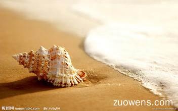 关于海螺的作文